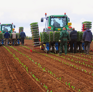 Leading supplier of commercial growing services – UK & Ireland -